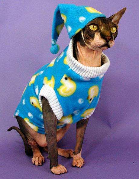 catspyjamas.jpg.6ed6c787c48b95a8b36abd128a2ad6d5.jpg
